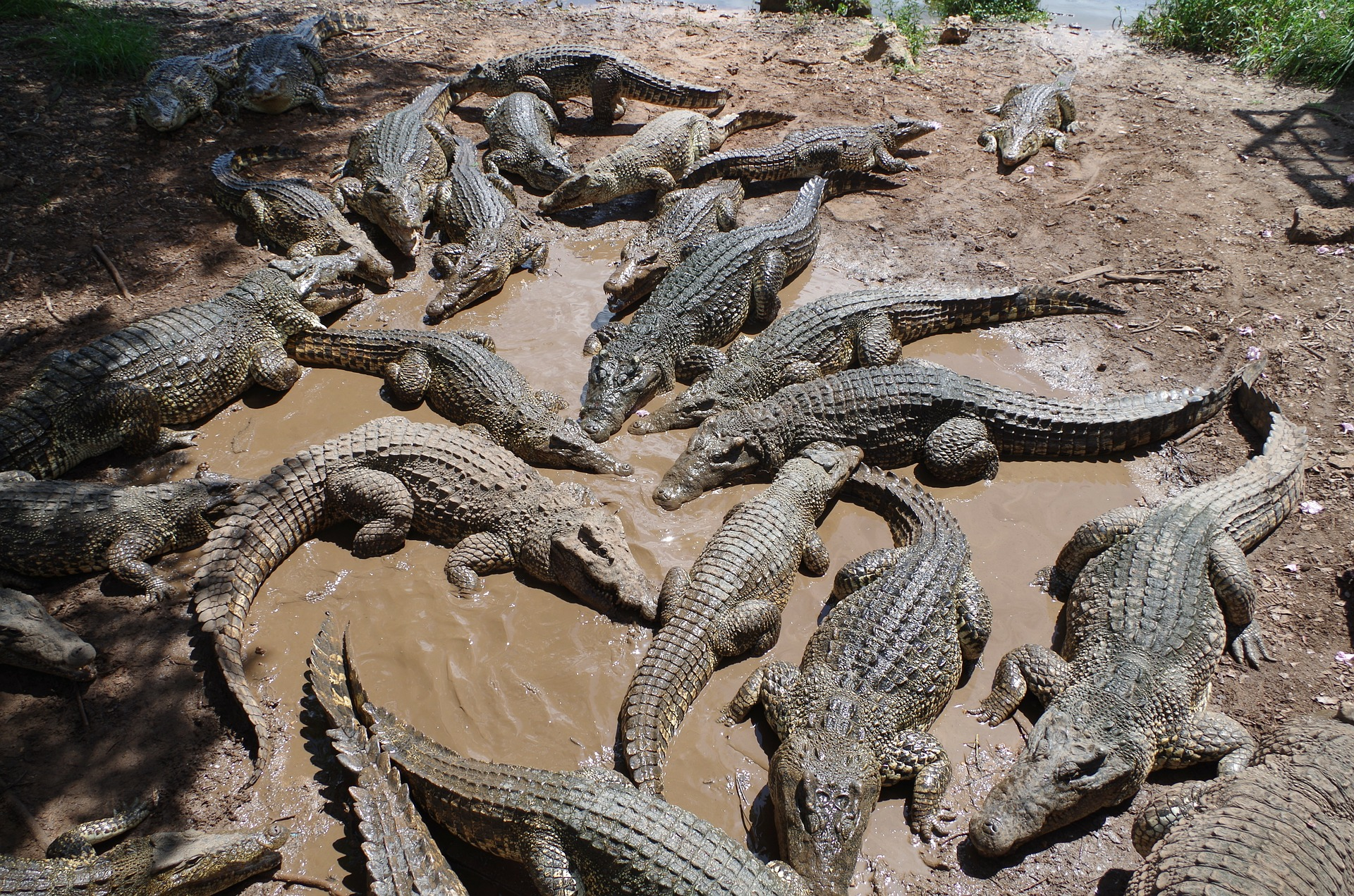 A Brush with Death: Swimming with Crocodiles